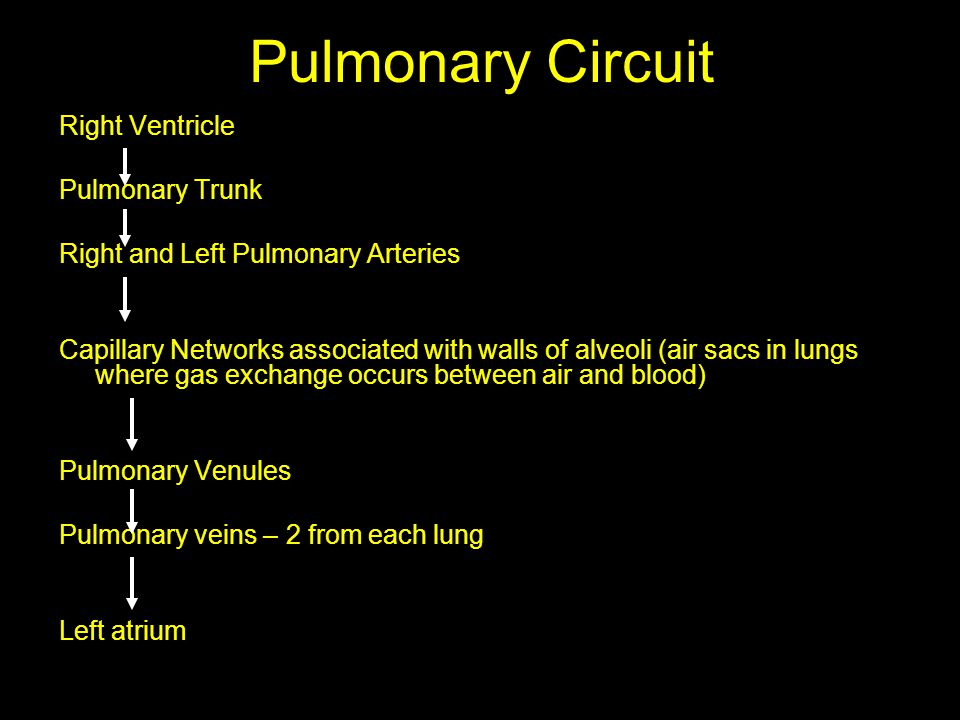 Pulmonary Circuit Right Ventricle Pulmonary Trunk