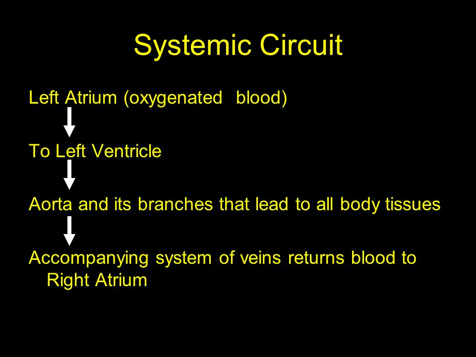 Systemic Circuit Left Atrium (oxygenated blood) To Left Ventricle