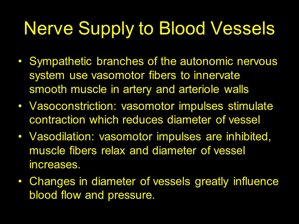 Nerve Supply to Blood Vessels