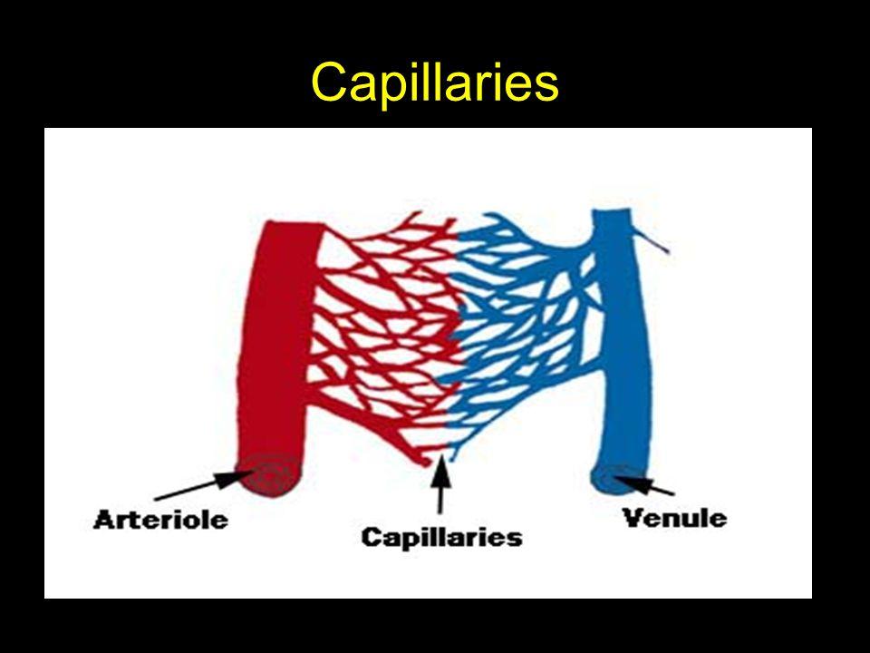 Capillaries Smallest-diameter blood vessels