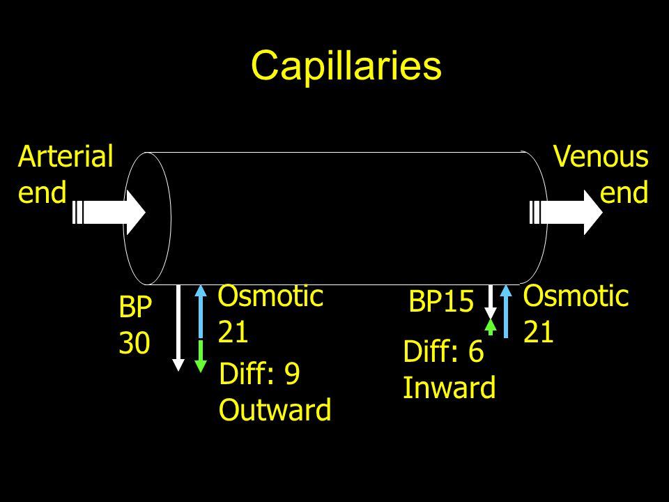 Capillaries Arterial end Venous end Osmotic 21 Osmotic 21 BP15 BP 30