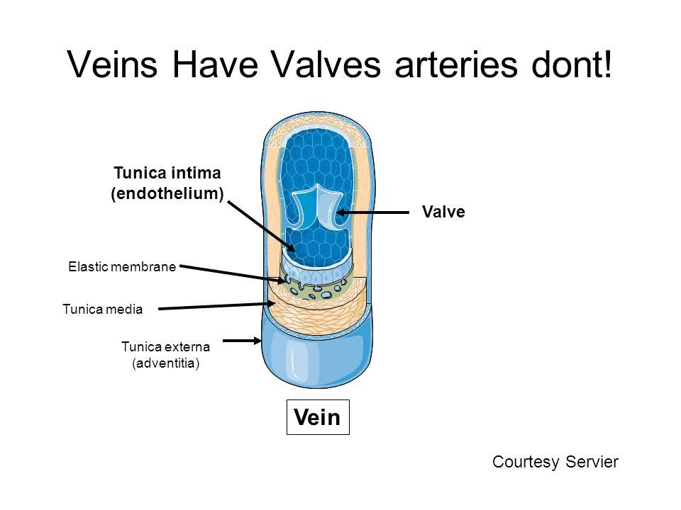 Veins Have Valves arteries dont!