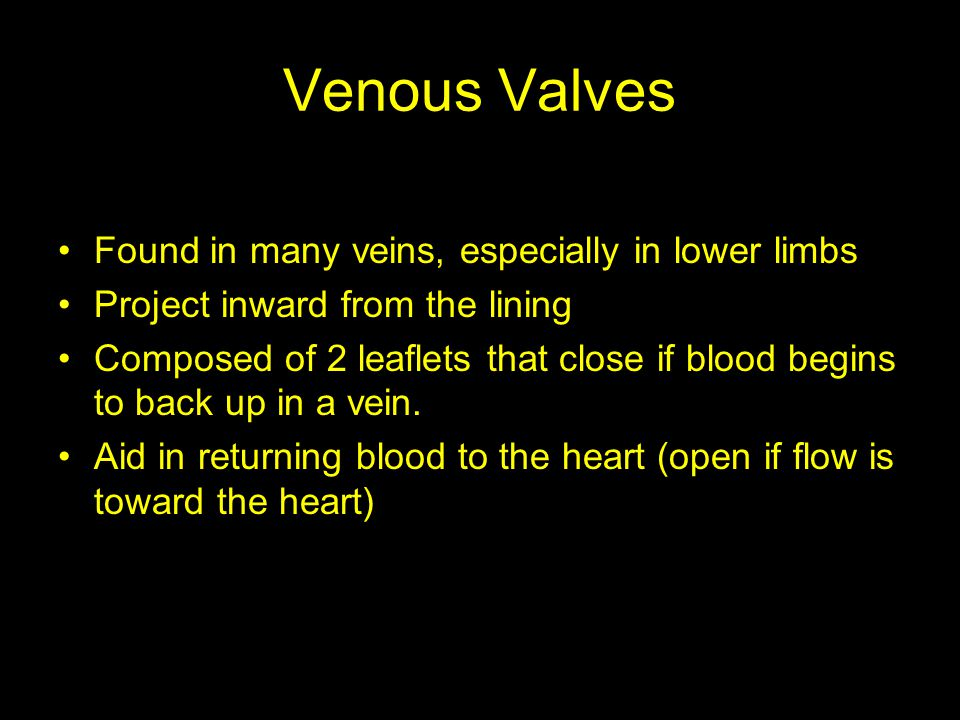 Venous Valves Found in many veins, especially in lower limbs