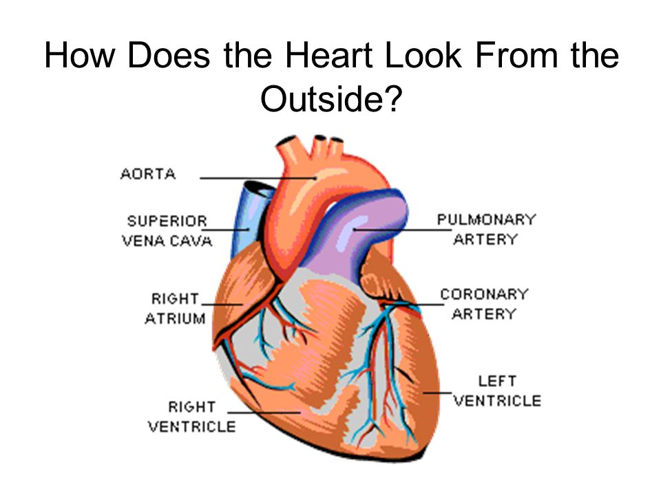 How Does the Heart Look From the Outside