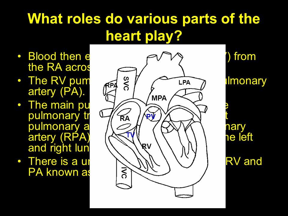 What roles do various parts of the heart play