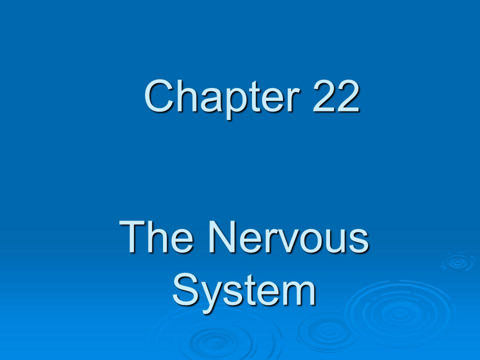 Chapter 22 The Nervous System