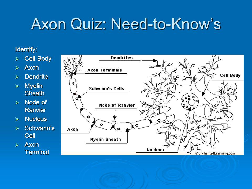 Axon Quiz: Need-to-Know's