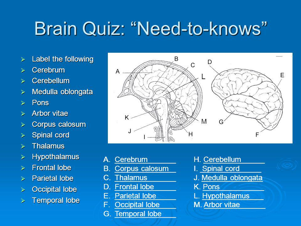 Brain Quiz: Need-to-knows