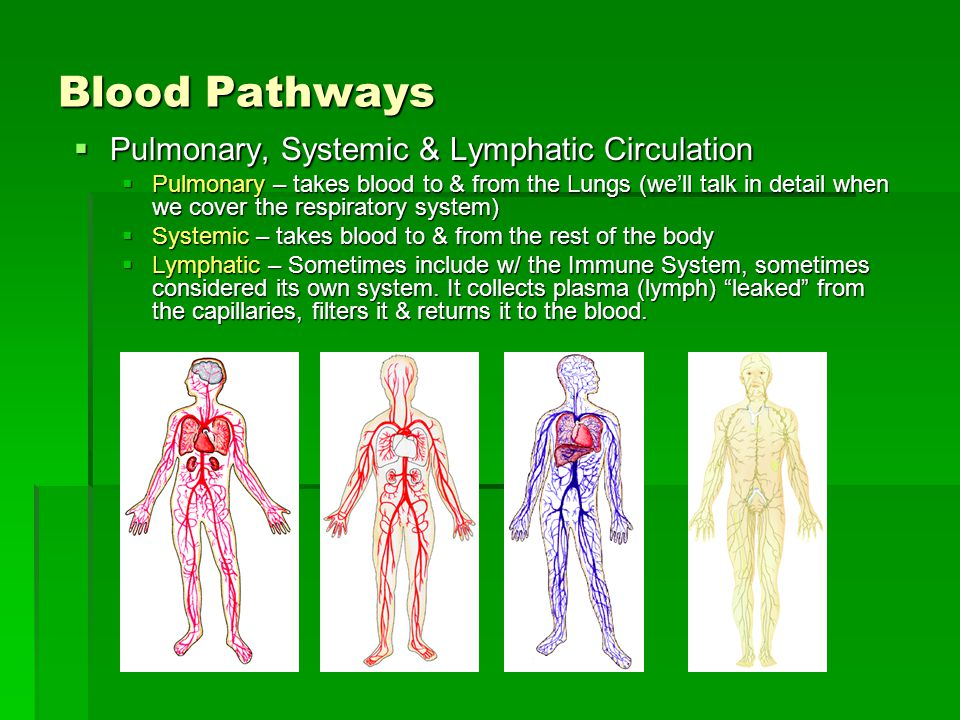 Blood Pathways Pulmonary, Systemic & Lymphatic Circulation