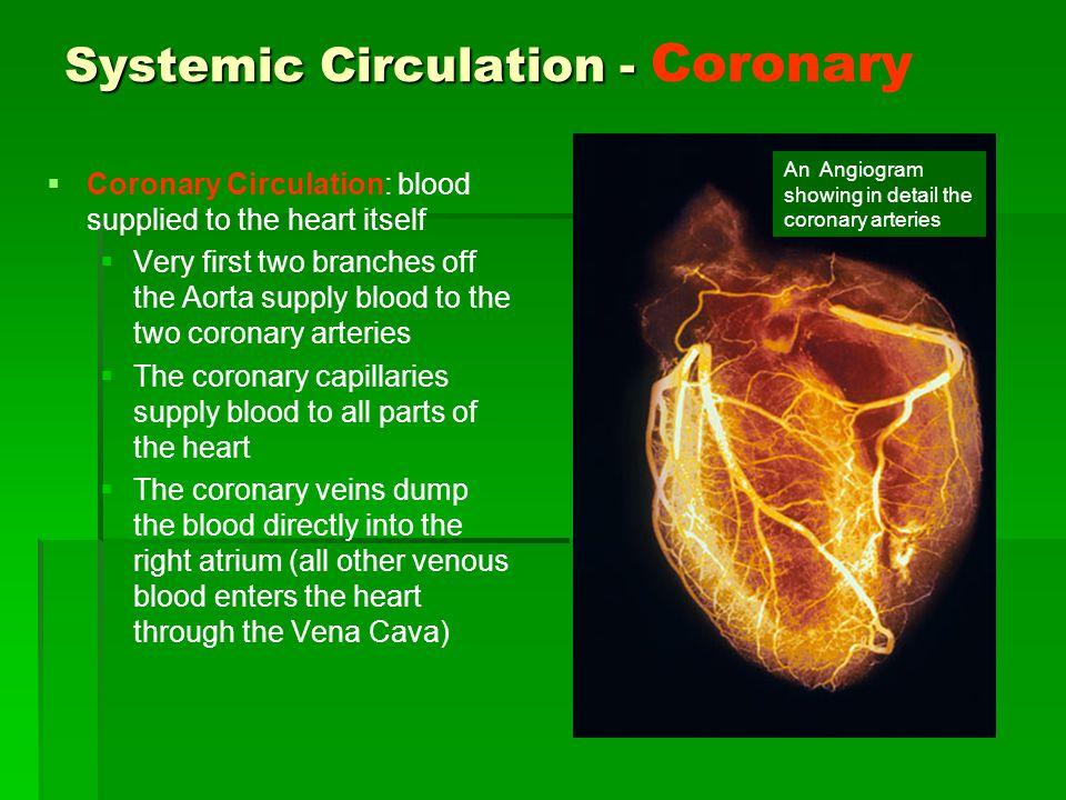 Systemic Circulation - Coronary