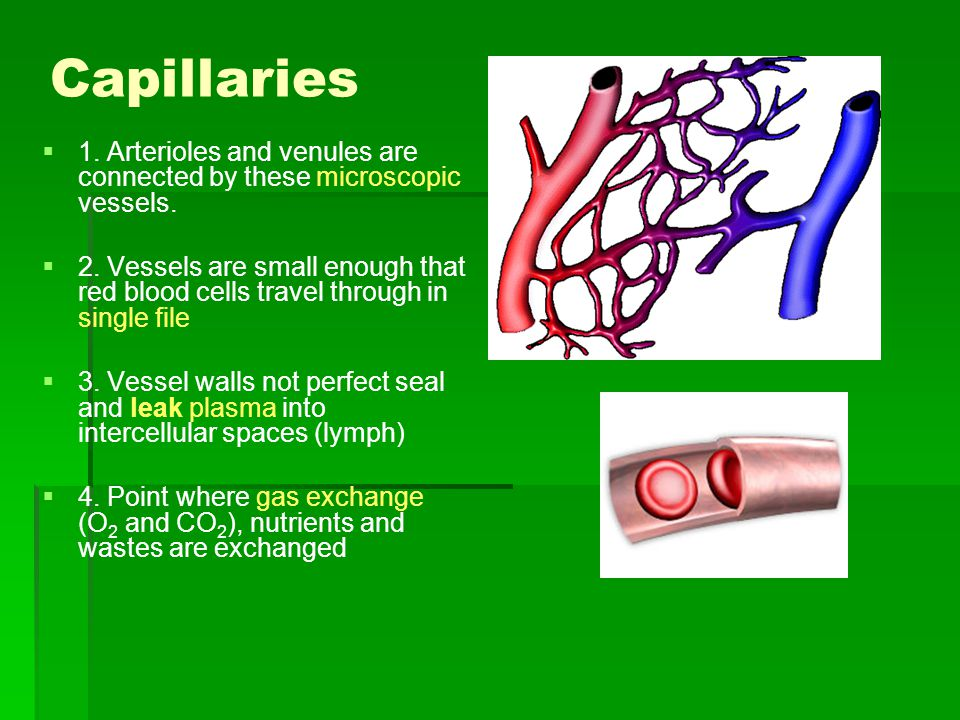 Capillaries 1. Arterioles and venules are connected by these microscopic vessels.