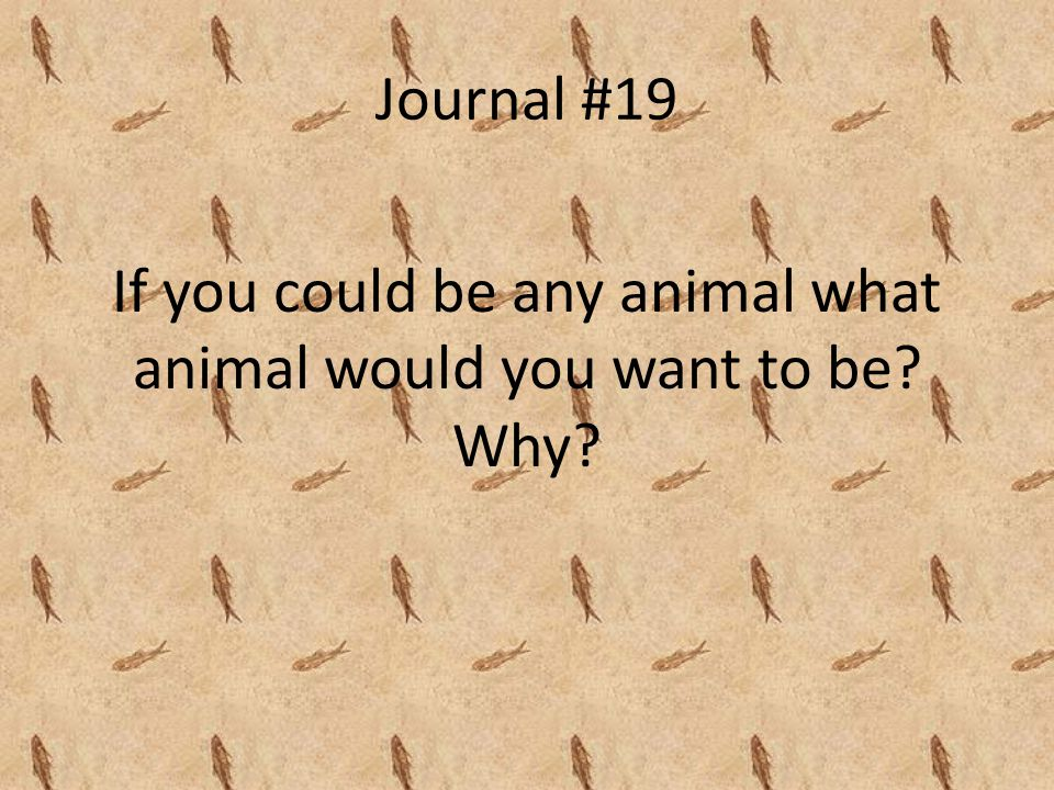 If you could be any animal what animal would you want to be Why