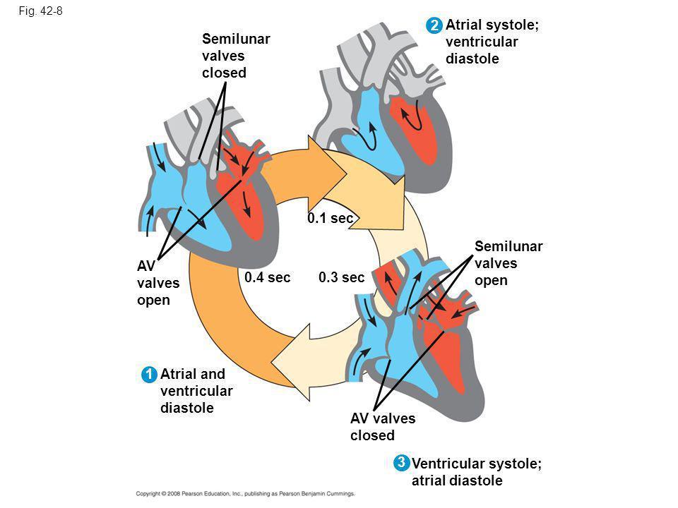 2 Atrial systole; ventricular diastole Semilunar valves closed 0.1 sec