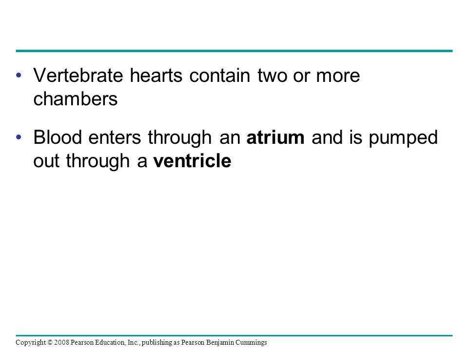 Vertebrate hearts contain two or more chambers