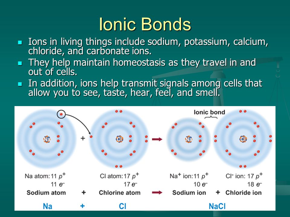 Ionic Bonds Ions in living things include sodium, potassium, calcium, chloride, and carbonate ions.