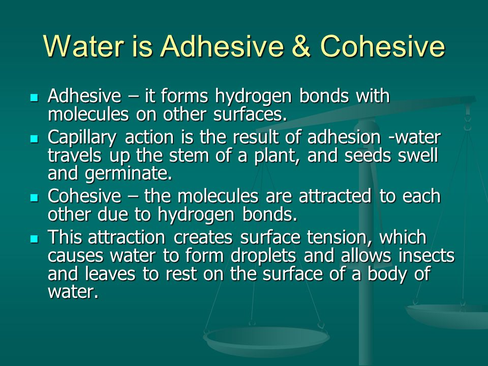 Water is Adhesive & Cohesive