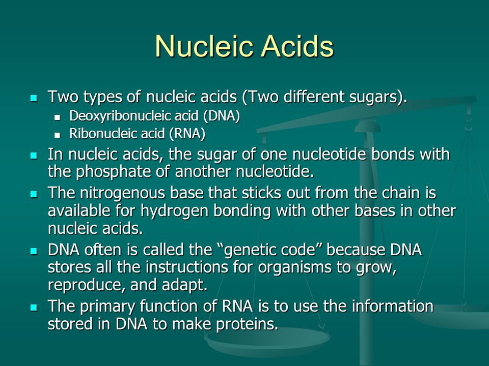 Nucleic Acids Two types of nucleic acids (Two different sugars).