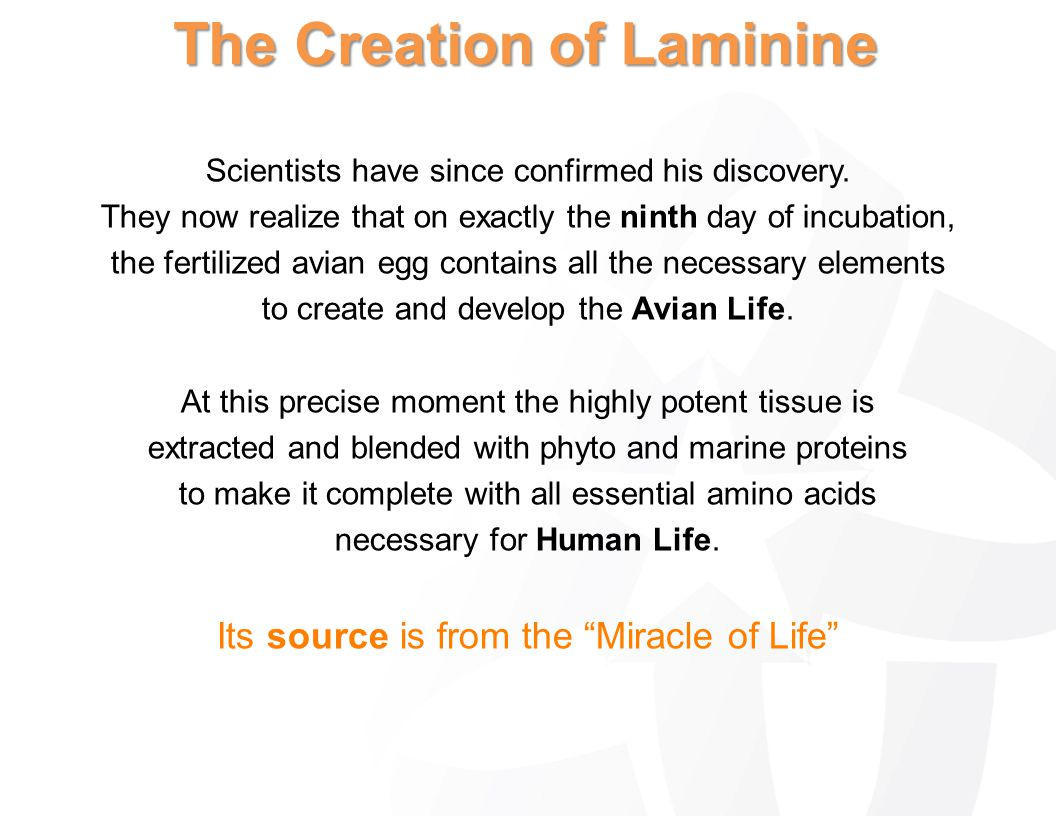 The Creation of Laminine