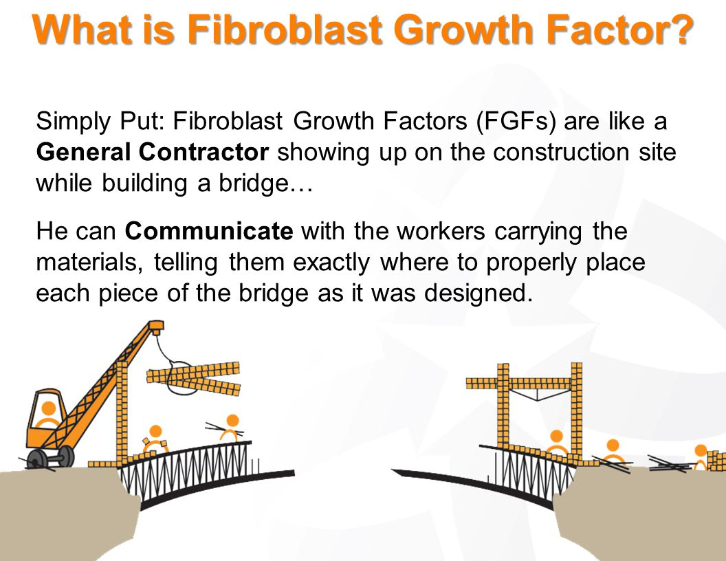 What is Fibroblast Growth Factor