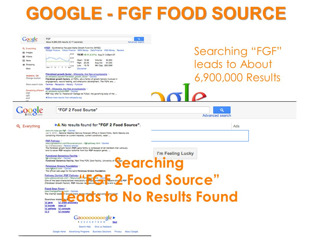 GOOGLE - FGF FOOD SOURCE