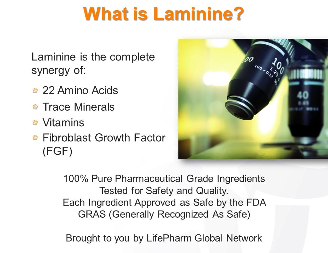 What is Laminine Laminine is the complete synergy of: 22 Amino Acids