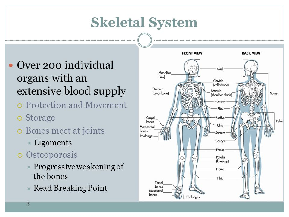 Skeletal System Over 200 individual organs with an extensive blood supply. Protection and Movement.