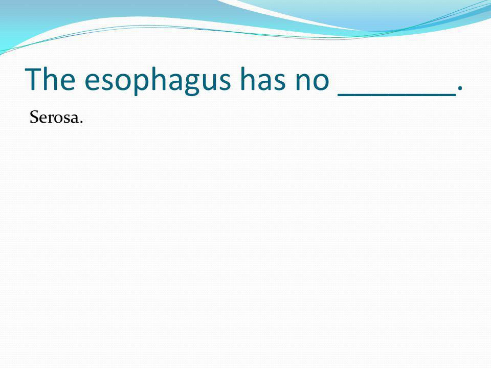 The esophagus has no _______.