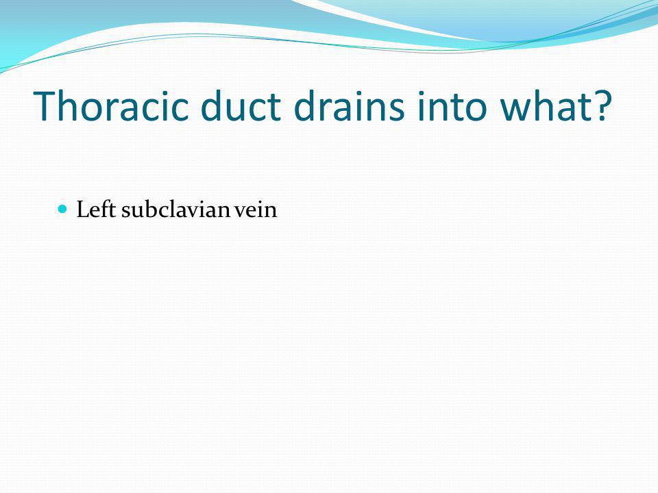 Thoracic duct drains into what