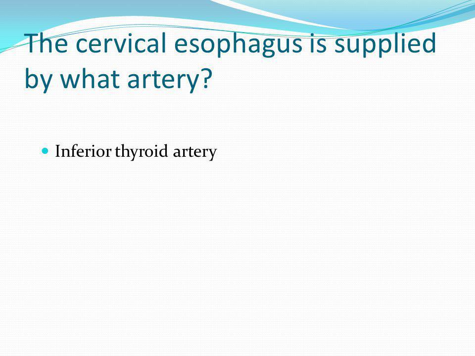 The cervical esophagus is supplied by what artery