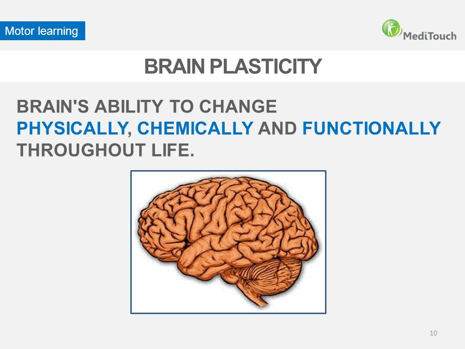 BRAIN PLASTICITY BRAIN S ABILITY TO CHANGE