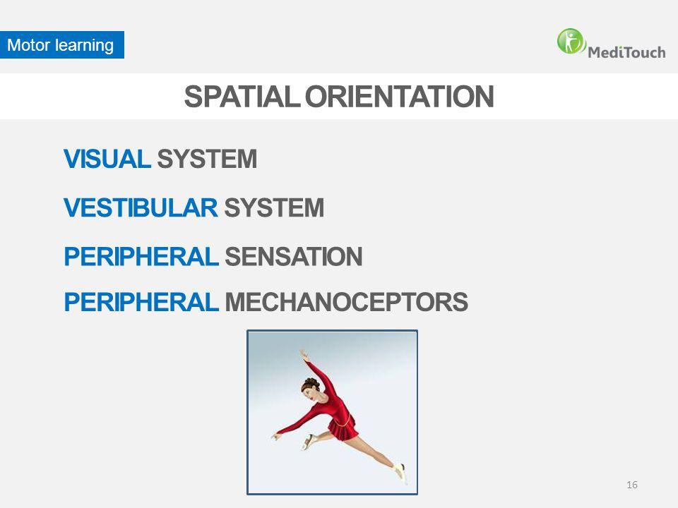 SPATIAL ORIENTATION VISUAL SYSTEM VESTIBULAR SYSTEM