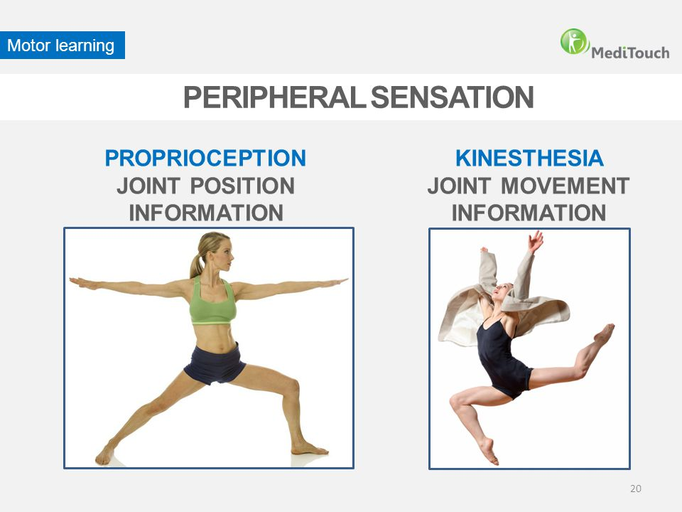 PERIPHERAL SENSATION PROPRIOCEPTION JOINT POSITION INFORMATION
