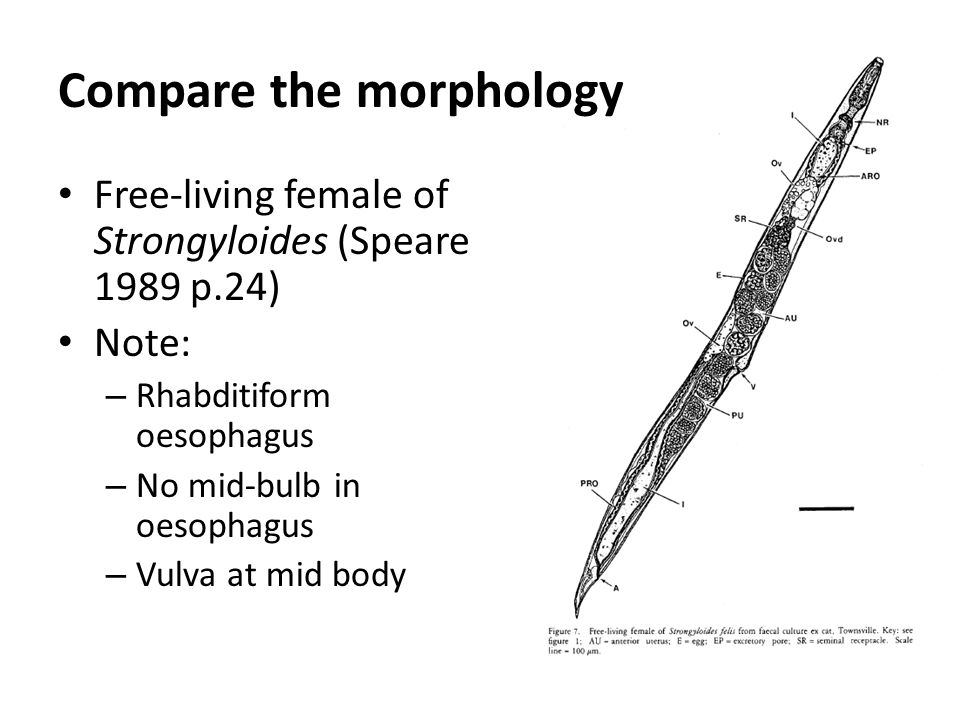 Compare the morphology