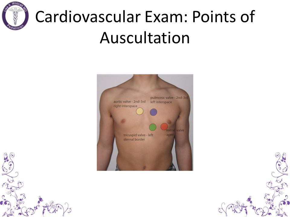 Cardiovascular Exam: Points of Auscultation