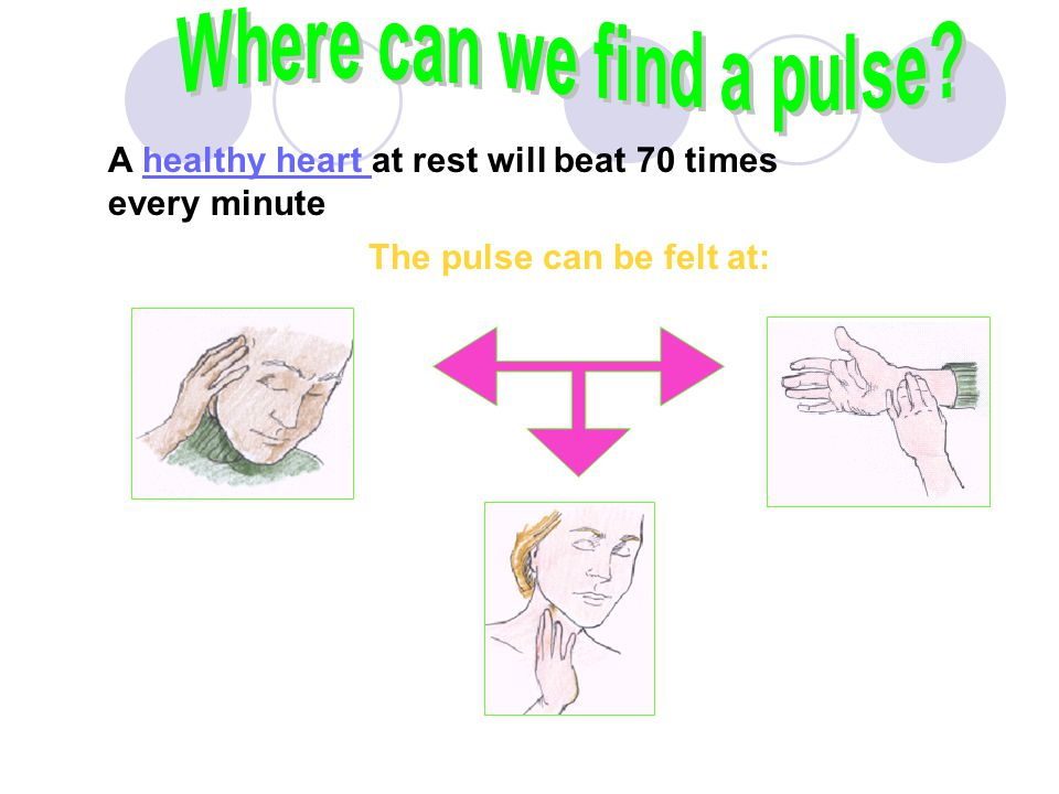 Where can we find a pulse The pulse can be felt at: