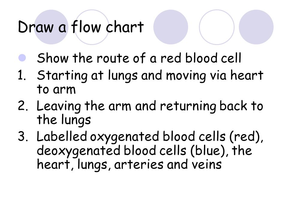 Draw a flow chart Show the route of a red blood cell