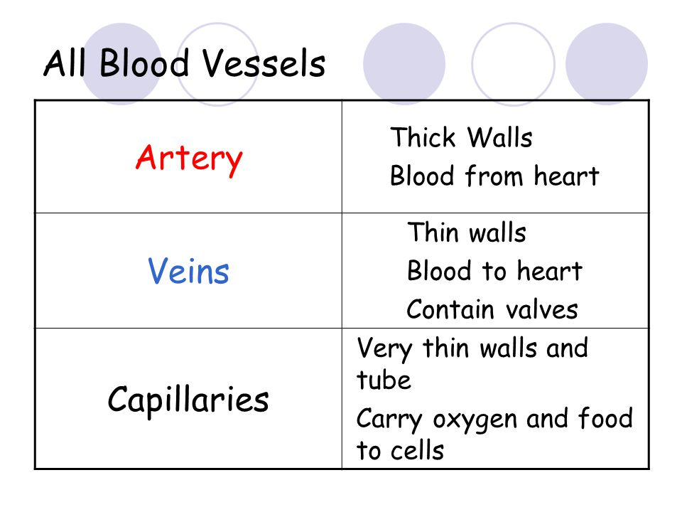 All Blood Vessels Artery Veins Capillaries Thick Walls
