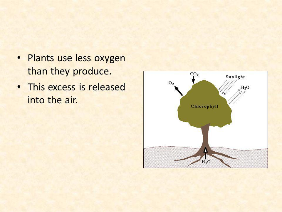 Plants use less oxygen than they produce.