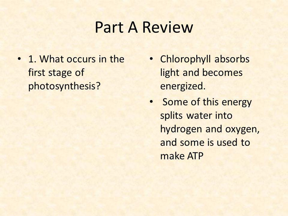 Part A Review 1. What occurs in the first stage of photosynthesis