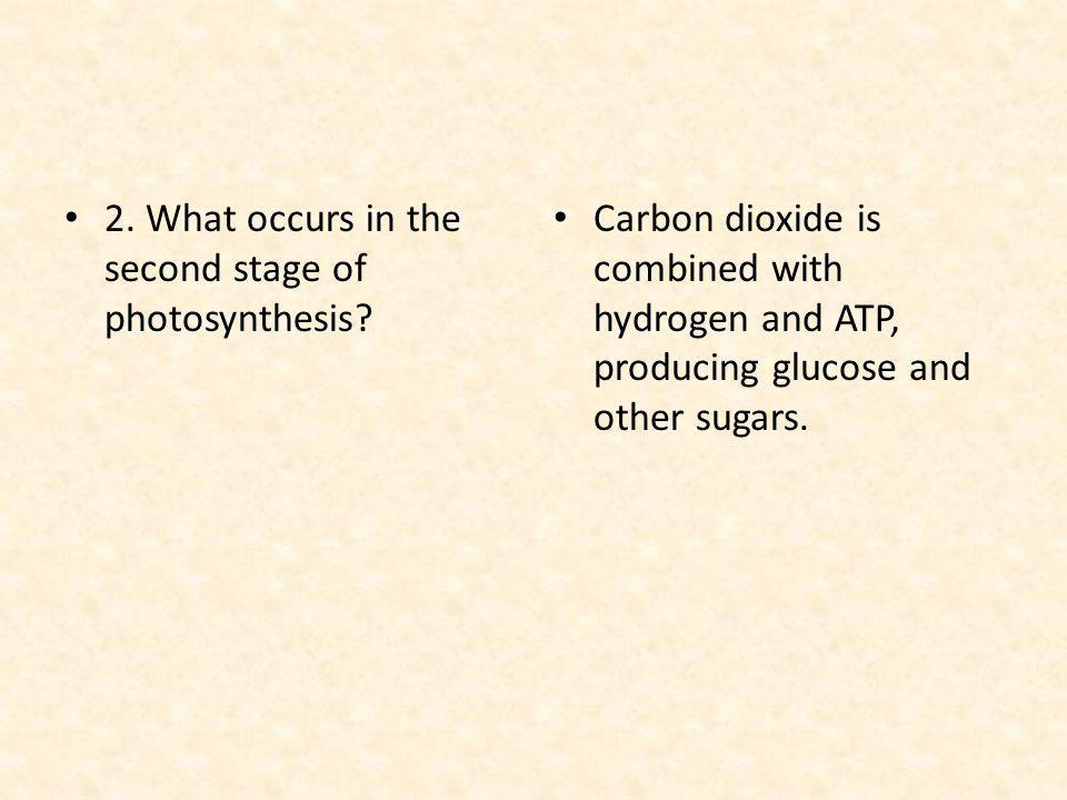 2. What occurs in the second stage of photosynthesis