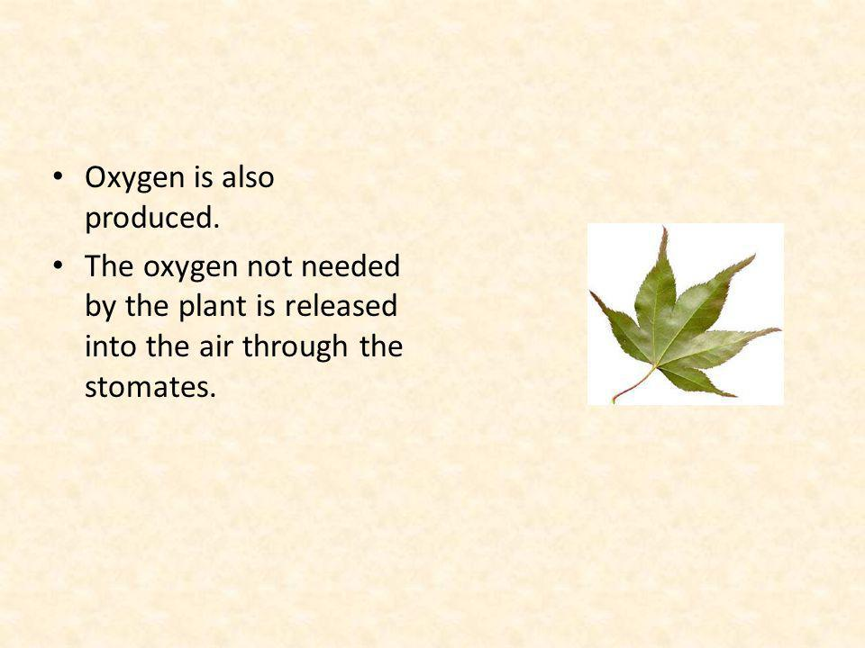 Oxygen is also produced.