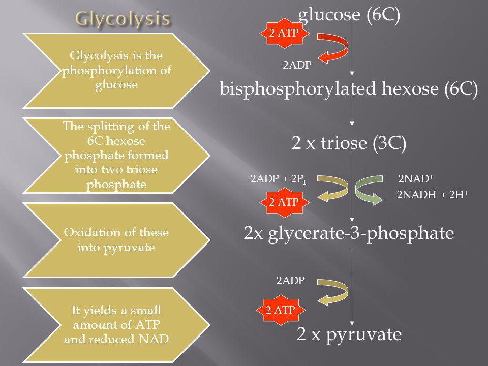 bisphosphorylated hexose (6C) 2 x triose (3C)