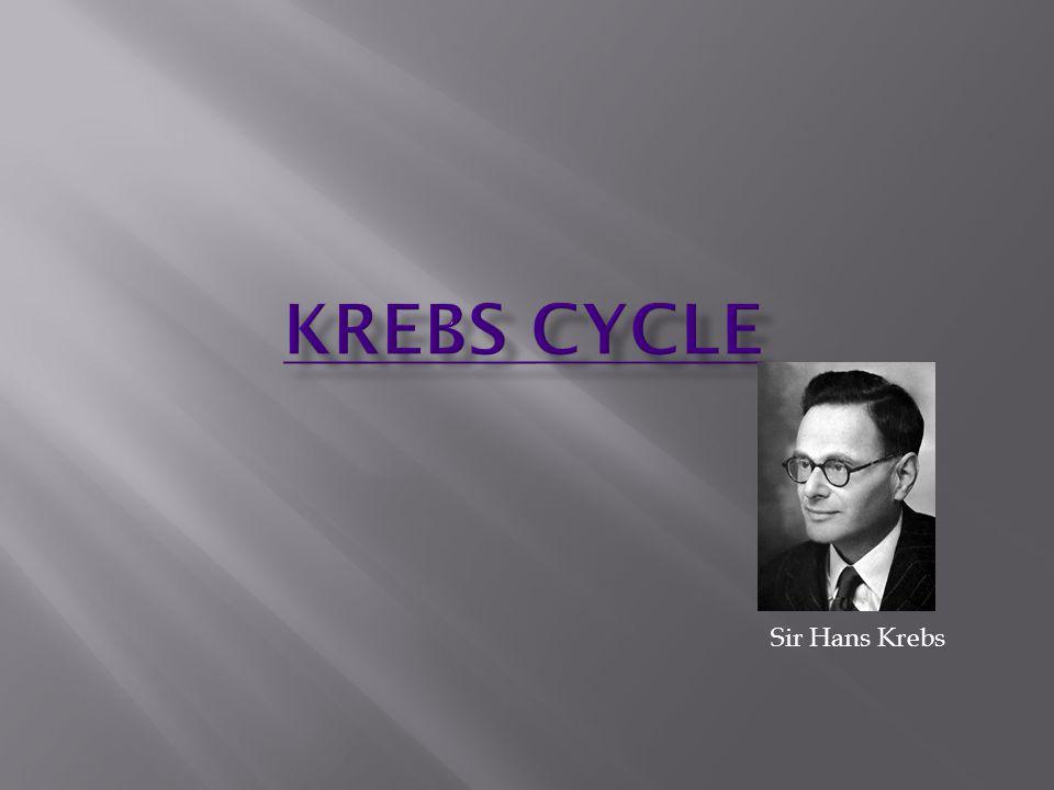 Krebs Cycle Sir Hans Krebs