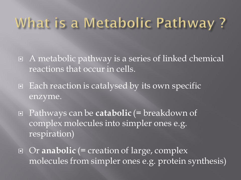 What is a Metabolic Pathway