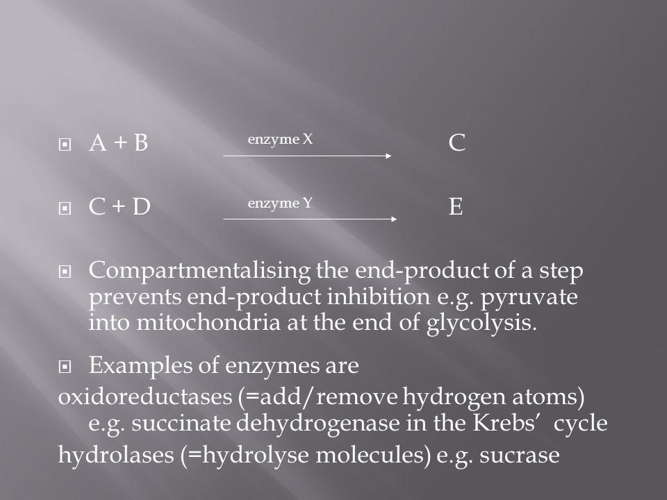A + B enzyme X C C + D enzyme Y E.