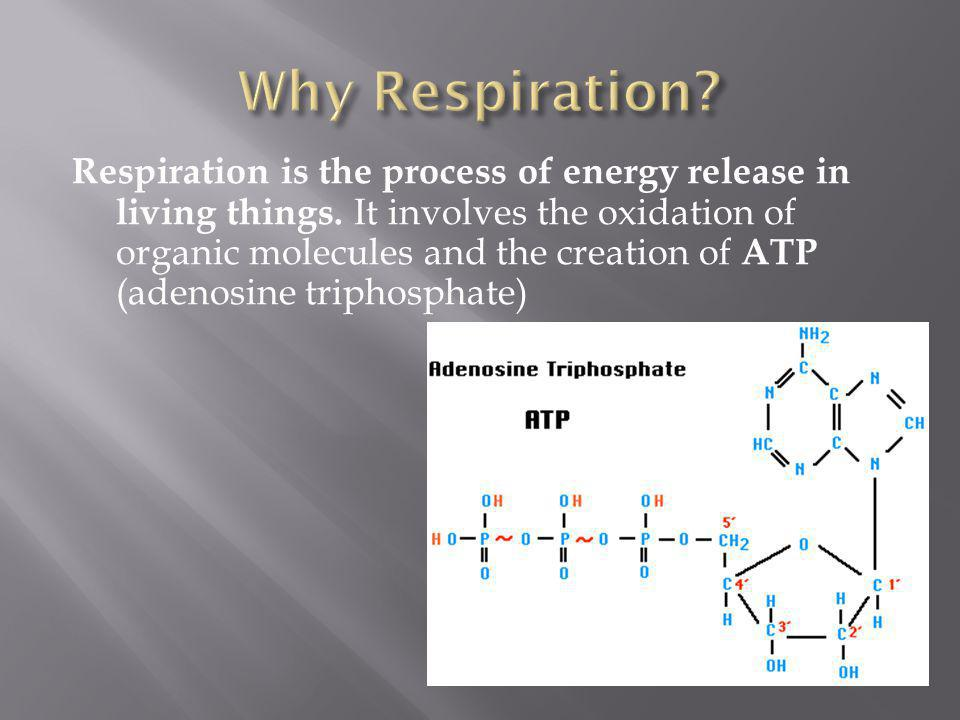 Why Respiration