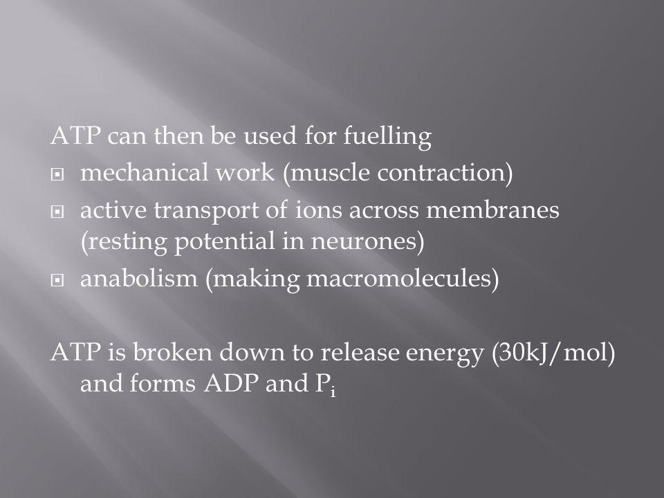 ATP can then be used for fuelling