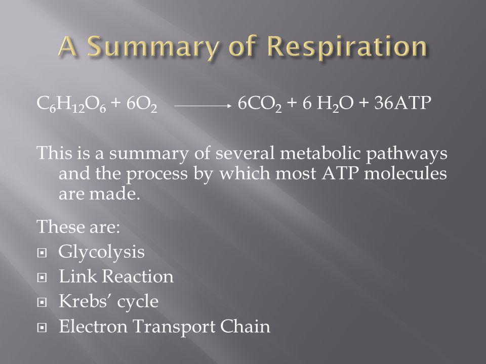A Summary of Respiration