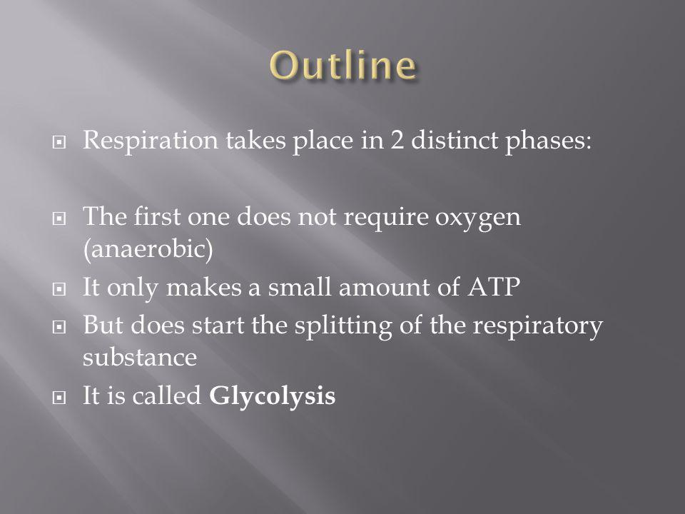 Outline Respiration takes place in 2 distinct phases: