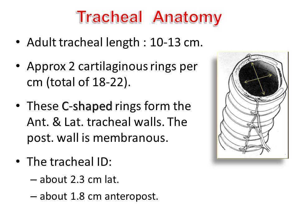 Tracheal Anatomy Adult tracheal length : 10-13 cm.